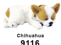 Perfect Petzzz - Chihuahua